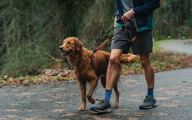 Dog post run walking with his owner