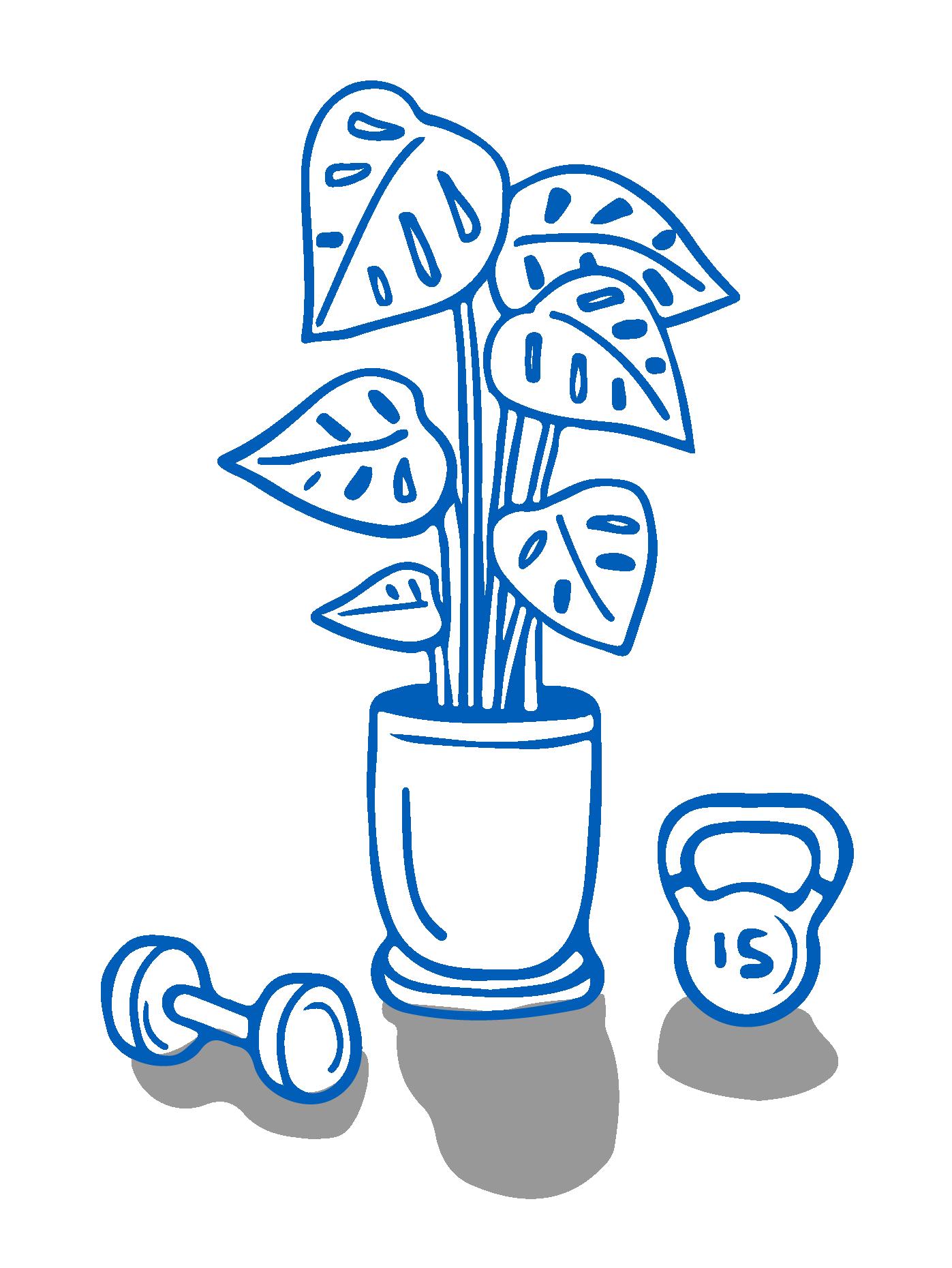 Eine Zimmerpflanze steht auf dem Boden zwischen einer Hantel und einer Kugelhantel.